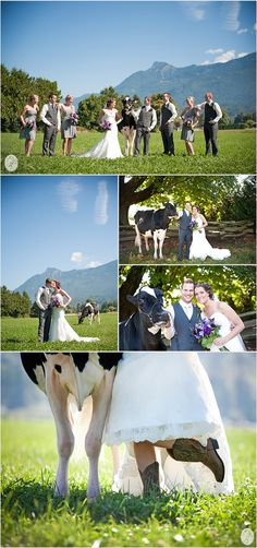 A cow in your wedding pictures...why not? :)...This is so me, but he will say a big fat NO. Someday I will own a cow