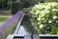 tuin tuinontwerp tuinarchitect hovenier hoveniersbedrijf tuinaanleg beplanting beplantingsplan onderhoud tuin met vijver lavendel hortensia's