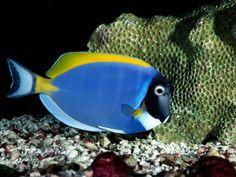 Peixes coloridos - imagens para o desktop, #11114                                                                                                                                                      Mais