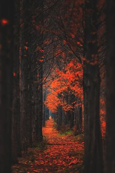 Year Round Fall For The Autumnal Spirit — banshy:   Pathway by Tiger Seo