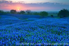 Beautiful Texas Scenery | Texas Landscape Photography: Texas wildflowers pictures, Texas ...