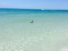Lido Beach, Water, Outdoor, Gripe Water, Outdoors, Outdoor Games, The Great Outdoors
