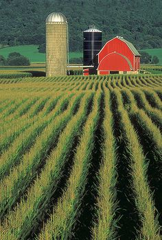 (American Farmscapes): Sauk County Farm, Wisconsin, (Honorable Mention) Fred Luhman, Silos and Smokestacks National Heritage Area, #barn #farm