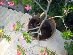 It's a relaxing sort of #SunFunDay for this Caribbean cat.