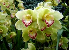 New York Botanical Garden - Lime and red orchids..if we did that combo it would not work