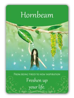 Hornbeam - Bach Flower Oracle Card by Susanne Winberg. Message: Freshen up your life!