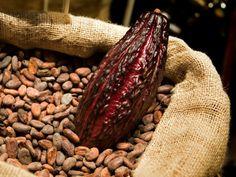 La civilización que descubrió el secreto que vivía dentro del fruto del cacao…