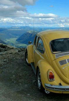 Vw Bus, Volkswagen Beetle, Beetle Car, My Dream Car, Dream Cars, Vw Vintage, Yellow Car, Old Classic Cars, Car Colors