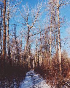 Nel mezzo del cammin di nostra vita mi ritrovai per una selva oscura...  by kaleighlara