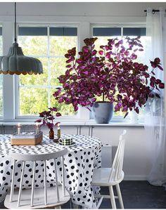 Flower Garden Layouts, Texas Home Decor, Diy Garden Bed, House Plant Care, Green Plants, Shade Garden, Plant Decor, Garden Inspiration, Houseplants