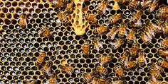 Unexpected uses of honey part 2  read here: http://www.bubblews.com/news/5558368-unexpected-uses-of-honey-part-2