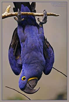 Oiseaux du Monde -- these birds are such fun to interact with when trained in a loving environment. Quite the comedians!