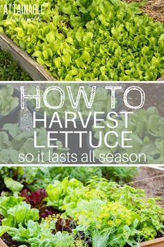 Indoor Vegetable Gardening, Home Vegetable Garden, Organic Gardening Tips, Fruit Garden, Edible Garden, Garden Plants, Container Gardening, Texas Gardening, Herb Gardening