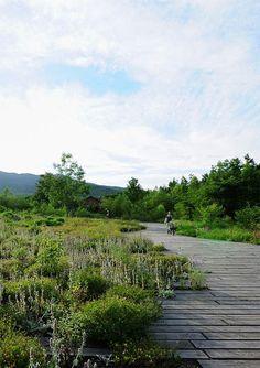 Dan Pearson_Tokachi Millennium Forest_Hokkaido Japan
