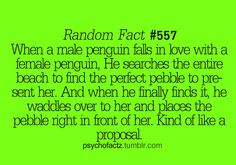 This just made me love penguins even more! That is just so sweet! Too freaking cute. love this! The More You Know, Good To Know, Wtf Fun Facts, Random Facts, Odd Facts, Creepy Facts, Random Things, Random Stuff, Funny Stuff