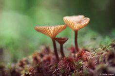 Apprenez à reconnaître les bons champignons lors d'un balade guidée ce samedi 10/09 à Jalhay !