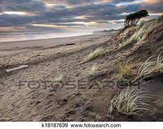 Image result for murals nz Muriwai Beach