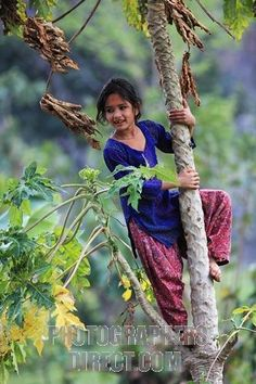 Nepali girl climbing a papaya tree in the hills of Nepal Himalaya stock photo Tibet, People Around The World, Around The Worlds, Vietnam, Papaya Tree, Ladakh India, Steve Mccurry, Asian History, Children Images