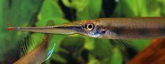 Dove nel mondo i pesci vivono la loro vita in minuscoli specchi di acqua on http://www.discusclub.net