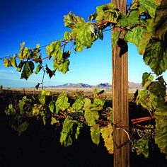 Wine Country Face-Off results | Southwest: Arizona vs. New Mexico | Sunset.com