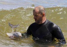 happy baby dolphin