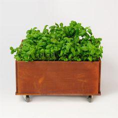 Nu kan du handla unika odlingslådor i dansk design i LEVA&BO:s webbutik. Välj mellan massor av modeller och storlekar.
