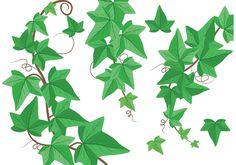 Ivy Vine Clip Art | Ivy Vine Vectors - Download Free Vector Art, Stock Graphics & Images Daffodils, Pansies, Vine Line, Leaf Border, Ivy Leaf, Free Vector Art, Pretty Flowers, Art Images, Grape Vines