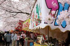 La #photo du jour : l'Iwakura Sakura festival à Iwakura préfecture d'Aichi nagatak #Japan