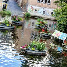Jede Menge Blumen im Fluss #erfurt #bunteserfurt #iloveerfurt #flower