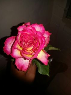 This rose is so pretty