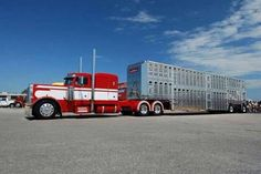 Red and white Peterbilt cow hauler