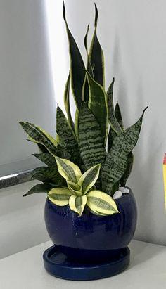 Succulent Pots, Planting Succulents, Flower Wall, Flower Pots, Bohemian Curtains, Bonsai Plants, My Secret Garden, Plant Decor, Carrera