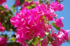pink wedding flower