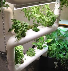 Grow herbs and salads on hydroponics system