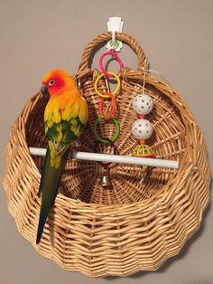 "Spiffy Pet Care Tips... Here is a ""Wall Perch"" I made for my conures. I found the right basket and added…"