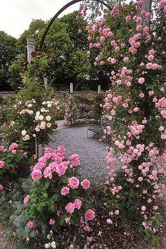 Mottisfont Abbey Rose Garden, Hampshire, England | Pink climbing roses on pergola arch