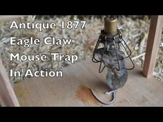 Rare Antique 1877 Eagle Claw Mouse Trap In Action. Mouse Traps That Work, Rat Traps, Eagle Claw, Rare Antique, Claws, Action, Antiques, Bali, Woods