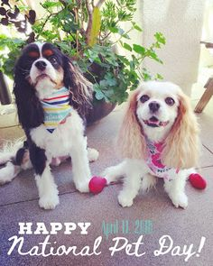 On the blog today: Happy National Pet Day