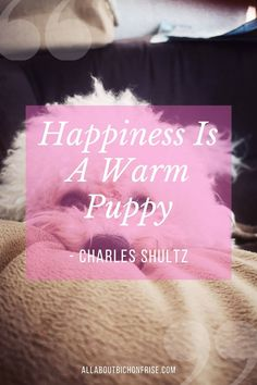 Happiness Is A Warm Puppy - Charles Shultz Our dogs are our best friends in the world without a doubt. Show your love and appreciation for these adorable doggos with these 21 inspiring dog quotes. PIN THIS to your Bichon Frise board to read later Mans Best Friend, Best Friends, John Grogan, Charles Shultz, Great Quotes, Inspirational Quotes, Cesar Millan, Little Puppies, Bichon Frise