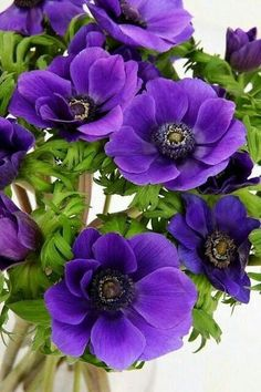 Cores, Flores e Linhas — beautyinthislife: Purple Flowers - Wedding Colors Exotic Flowers, Amazing Flowers, Colorful Flowers, Purple Flowers, Wild Flowers, Beautiful Flowers, Flowers Uk, Anemone Flower, Flower Art