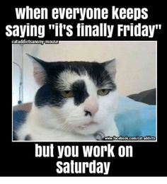 126 Best Friday Humor images