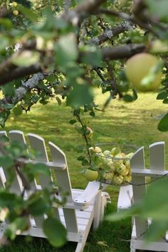 Enjoying the view under the green apple tree in the orchards at Sage Farm.
