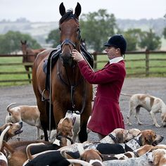 Whipper-in and hounds Opening Hunt this Saturday YAY! Horse Fly, Horse Riding, Basset Hound, Basset Artesien Normand, Griffon Nivernais, Grand Basset Griffon Vendeen, Fox Hunting, Horse World, The Fox And The Hound