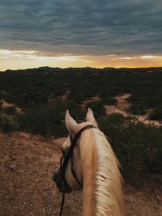 Equestrian and horses: Photo Cute Horses, Pretty Horses, Horse Love, Beautiful Horses, Animals Beautiful, Cute Baby Animals, Animals And Pets, Funny Animals, Cavalo Wallpaper