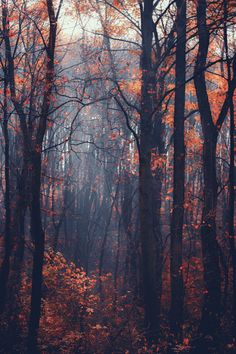 Photograph byOvidiu Constantin DRONon 500px