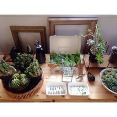 Atsushiさんの、ユーフォルビア,多肉植物,サボテン,NO GREEN NO LIFE,植物,のお部屋写真