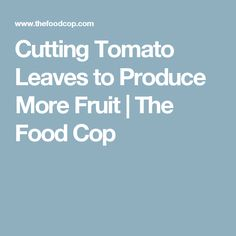 Cutting Tomato Leaves to Produce More Fruit | The Food Cop