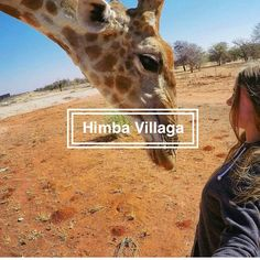 The himba village where the giraffe is living is located in Kamanjab, Namibia. This giraffe is tame and living with the traditional himba's. Ecommerce Hosting, Backpacking, Giraffe, Meet, Backpacker, Felt Giraffe, Giraffes, Travel Backpack