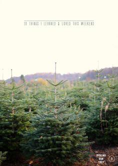 best-hristmas-tree-farms
