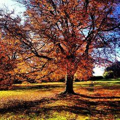 Autumn at Charlton Down, Dorset